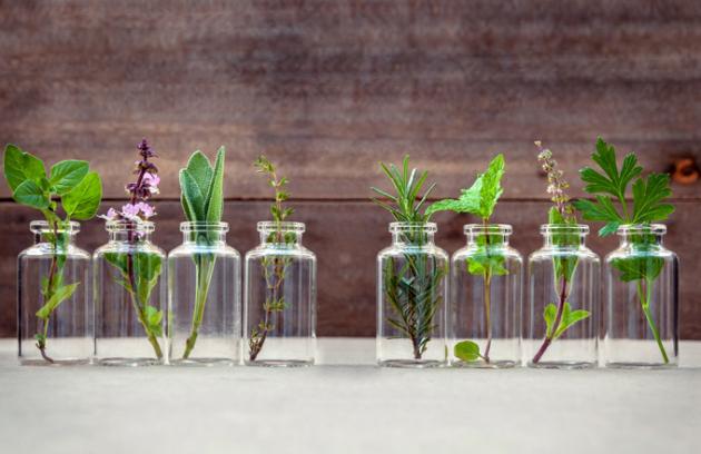 Čerstvé bylinky oceníme v kuchyni jako zdravé zelené koření. Dají se také použít jako první pomoc při lehkých zdravotních potížích. Představme si největší favority pro domácí pěstování.