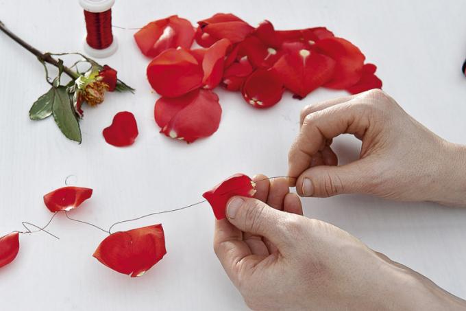 Jednu růžičku si ponechte do vázičky a ostatní květy rozeberte na jednotlivé lístky a postupně je navlékněte na vázací drátek