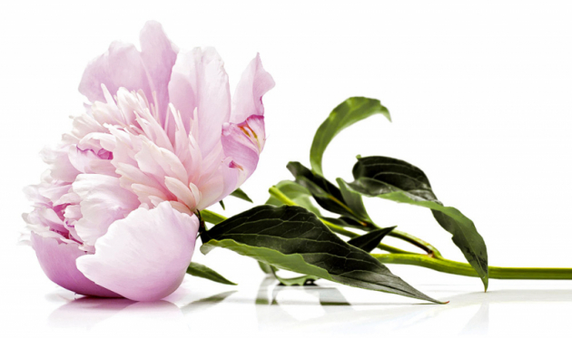 FOTO: Blumenbüro Holland