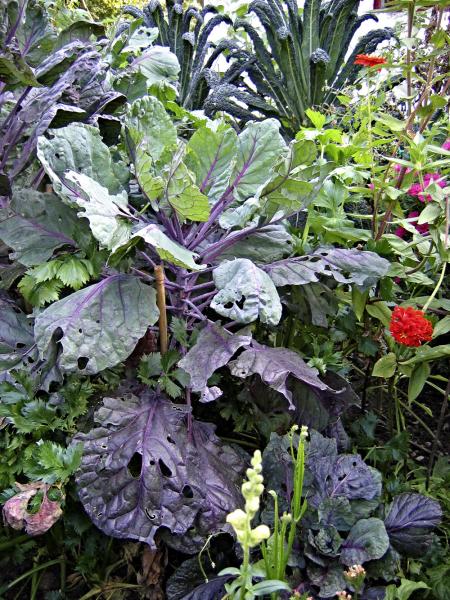 Zatímco vpřírodě vznikají druhově pestrá rostlinná společenstva, která se navzájem doplňují, sama odsebe, nazahradě provádí výběr rostlin ajejich sesazení člověk. Najeden záhon tak můžete vysadit nejen více zeleninových druhů, ale iužitkové aokrasné rostliny současně. Vhodně zvolené kombinace vám usnadní práci během sezony, prospějí úrodě anavíc budou dobře vypadat.
