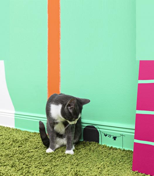 Kočka žijící vinteriéru potřebuje zabavit. Můžete jí dobytu přinést kočičí trávu neboli šantu kočičí (případně bublifuk svůní šanty kočičí), jednoduché hračky vpodobě malé myšky, cáry látek naprovázku, zmačkaný kus papíru, laserové ukazovátko nebo jí můžete nakreslit nastěnu díru, ze které myška nikdy nevyleze (viz foto).