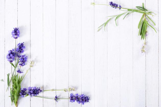 Nenáročná levandule má své místo vbylinkových iokrasných zahradách. Okrasné druhy mají větší, různě tvarované květy, ale neobsahují tolik účinných látek jako levandule lékařská