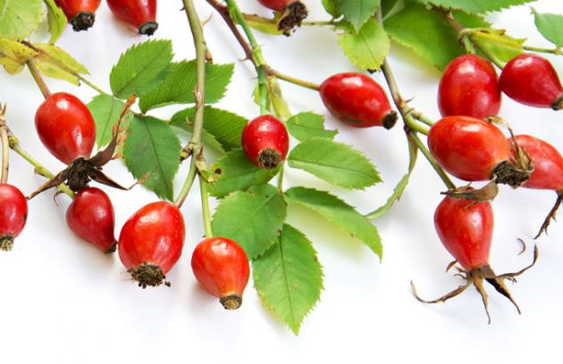 Šípkové růže jsou rozšířené pocelé Evropě až poMalou Asii aÍrán. Kromě luk aremízků se objevují inamalbách ajsou motivem pro potisky ivýšivky nalátkách. Růžové květy ajasně červené plody zdobí nejednu vázičku či hrneček.
