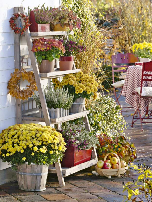 Většina rostlin se pomalu chystá kespánku, listí se barví doohnivých odstínů avládu nad zahradou nachvíli přebírají poslední podzimní květiny. Jsou to zejména oblíbené chryzantémy, kterým se přiléhavě říká listopadky či dušičky.