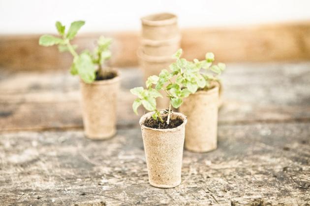 Velkým pomocníkem mohou být pěstební květináče FloraSelf z bílé rašeliny zaručující rychlý růst výsadby. Jednoduše je naplňte výsevním substrátem, přidejte semínka a zalijte. Semínko by mělo být zakryto přibližně dvojnásobnou vrstvou, než je jeho velikost