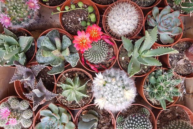 České květinářství Zahrada na niti se kromě prodeje rostlin věnuje i jejich vyměňování a darování. Už čtvrtým rokem pořádá Rostlinnou štafetu, akci určená všem milovníkům rostlin, kde se můžete zbavit rostlinných přebytků a odnést si nové kousky. A to vše bez jakýchkoliv poplatků. První letošní štafeta proběhne v úterý 7. dubna, další jarní termíny už jsou také vypsány.