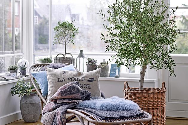Nadovolené veStředomoří jste se zamilovali dopřekrásných olivovníků spokrouceným až bizarním kmenem? Máme pro vás dobrou zprávu. Jedinečnou atmosféru, kterou kolem sebe tyto stálezelené stromy šíří, si můžete užít inavaší terase nebo balkoně.