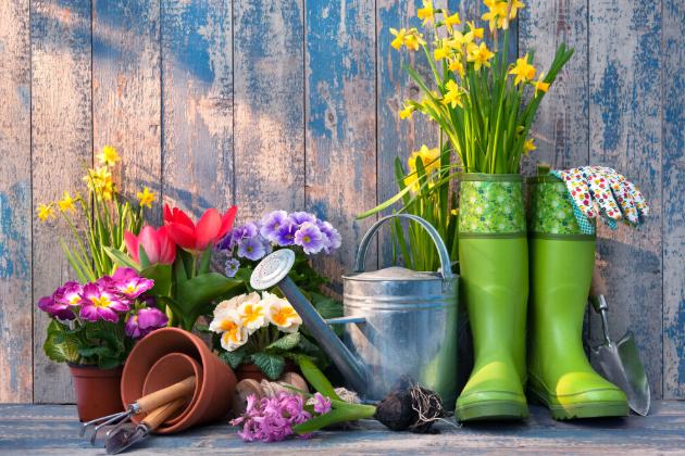 Jaro je tady a na zahradě nás čeká spousta práce. Nastává čas kypření, hnojení aořezávání. Sází se ovocné stromky a poprvé letos vytáhneme zkůlny sekačku na trávu.