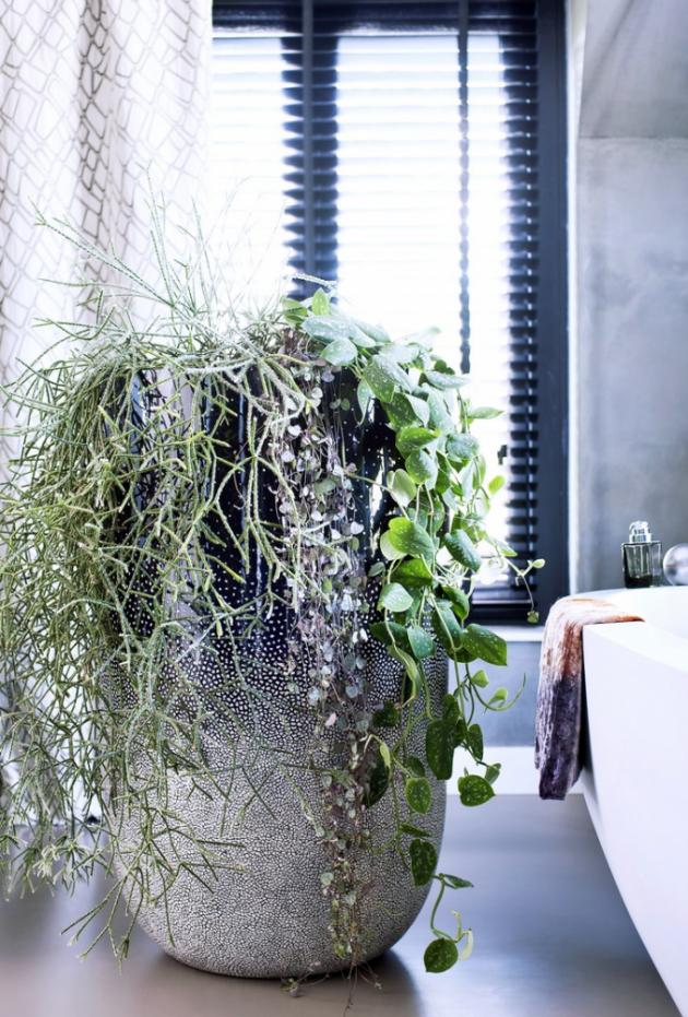 V koupelně se bude dařit i některým palmovitým rostlinám jako například horské palmě a dračinci. Prosperovat by měla i africká fialka, filodendron, břečťan, toulitka (Anthurium), fíkovník nebo bromélie (s výjimkou těch s barevnými listy).
