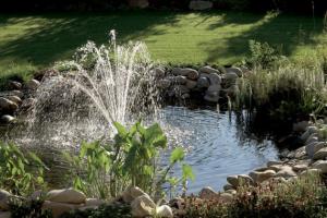 Jezírko se může snadno stát klenotem každé zahrady. Aby vypadalo ksvětu, je ale potřeba se o něj starat. Bez řádné péče se vodní oáza klidu rychle promění vnevábnou zelenou louži.
