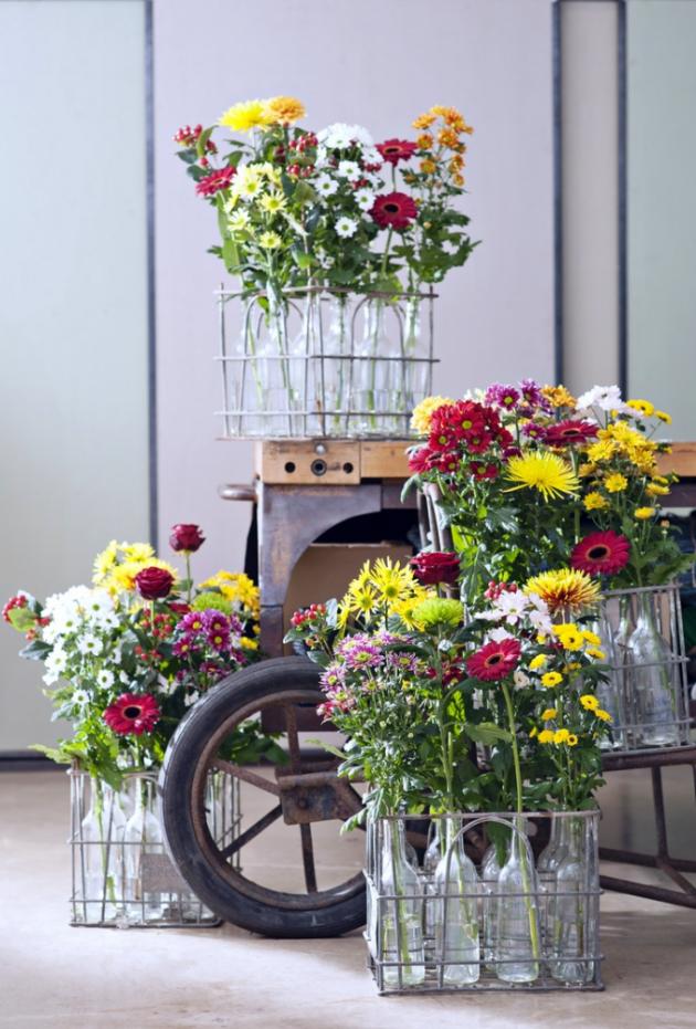 Chryzantémy kvetou vevšech barvách aodstínech kromě modré.