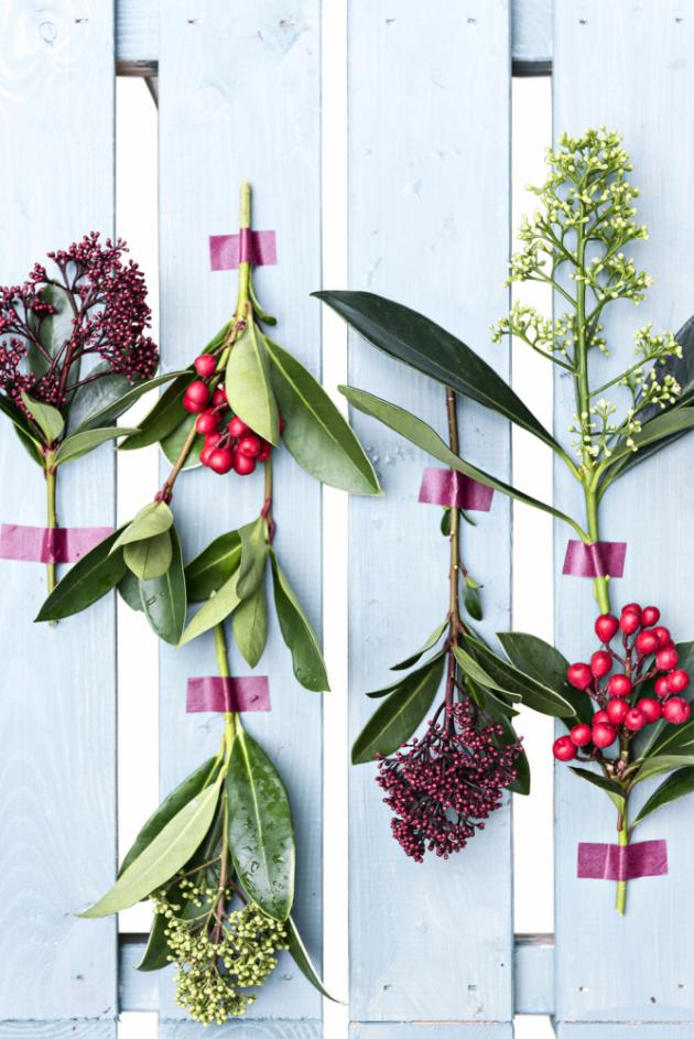 Vzhledem k tomu, že skimmie jsou dekorativní svým listem i plodem, hodí se i k řezu do květinových vazeb.