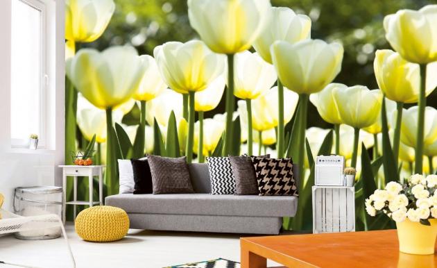 Vliesová fototapeta - bílé tulipány