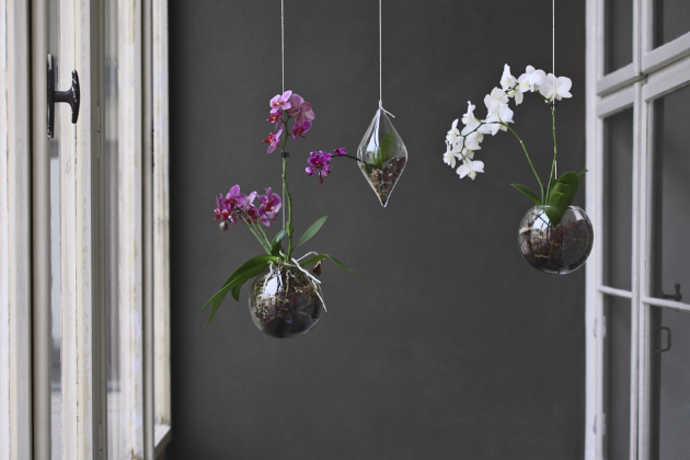 Co orchideje opravdu milují, je světlo a vzdušná vlhkost i pro kořeny, což aerárium dokonale splňuje. Orchideje mají rády i slunce, proto mohou být umístěné na plně osluněném místě. Stačí jim zhruba jednou týdně mírná zálivka, aby byl substrát stále mírně vlhký. Pozor ale na přelití, mohly by jim začít uhnívat kořeny. Občasné hnojení přispívá k častějšímu kvetení.