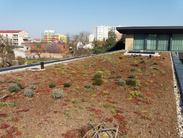 Příběh Rodinné zelené střechy roku začal u extenzivního typu zelené střechy – tedy střechy nenáročné na údržbu, jejíž porost vzhledem ke skladbě vegetačního souvrství tvoří zejména rozchodníky anetřesky.