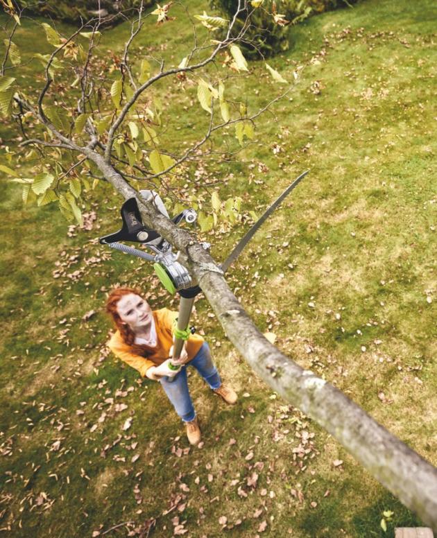 Ovocné stromy se obvykle zastřihávají vedvou etapách: v zimě av létě