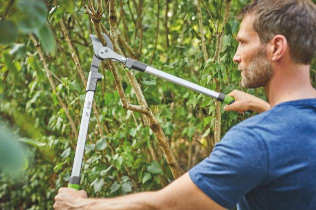 Správná úprava a údržba stromů i dřevin je tvrdým oříškem pro mnohé zahrádkáře. Má vliv na to, jak budou stromy prospívat.